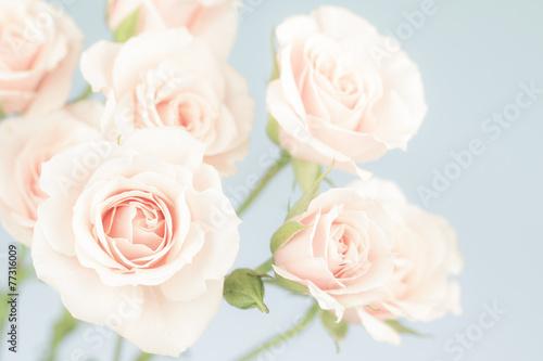 Der rosa Garten  der Pastellliebe