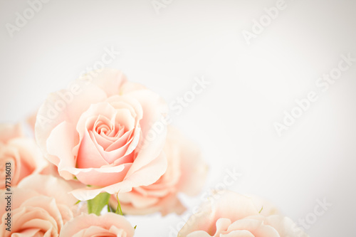 Foto op Canvas Bloemen Peach rose cluster with vignette