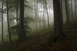 dark green forest with fog