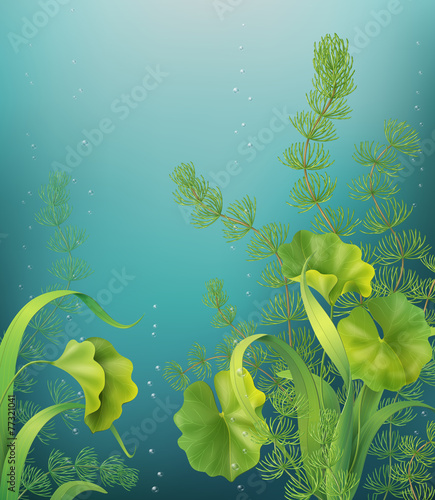 Underwater background - 77321041