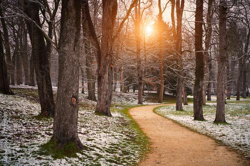 canvas print picture Road winter park