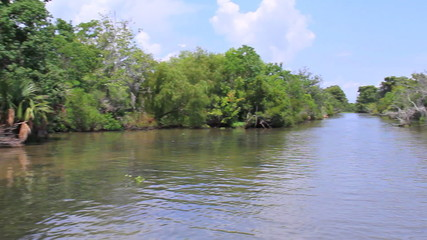 Bayou Swamp 1