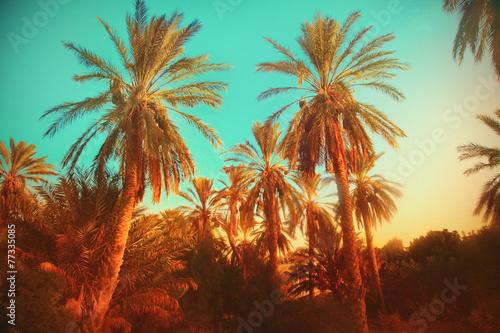 Fotobehang Tunesië Palms