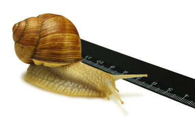 The snail and the ruler