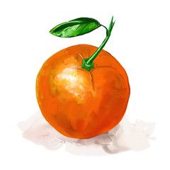 fruit orange Vector illustration  hand drawn  painted watercolor
