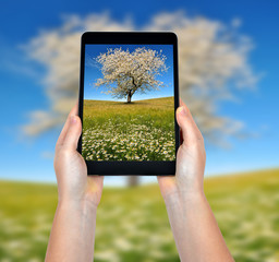 Taking photos of a spring landscape with a tablet