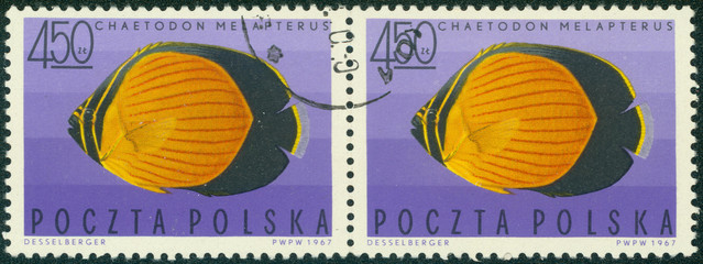 stamp printed in Poland shows Black-eye butterflyfish