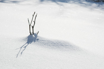 Small twig in the snow with shadow