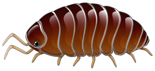 A woodlouse