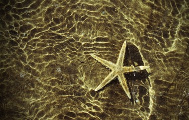 sea star under the warm sea water