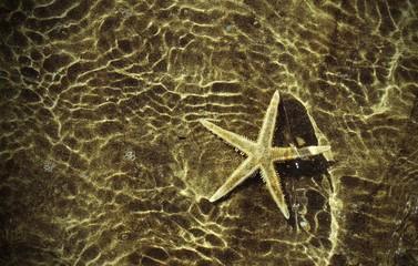 sea star under the warm sea water