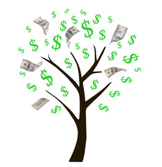 Money tree isolated on white