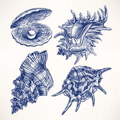 Set with seashells