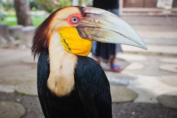 black toucan