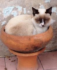 cute cat in a bowl