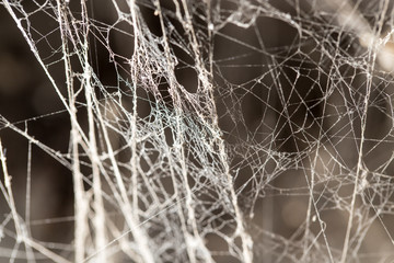 abstract background old spider webs