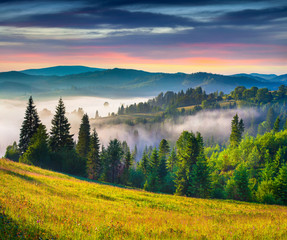 Colorful summer sunrise in the Carpathian mountains.