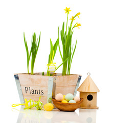 Easter eggs with birdhouse and narcissus flowers, isolated on wh