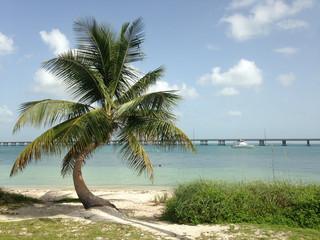 USA, Florida, Sun, sand and palm tree