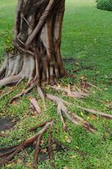 tree's root