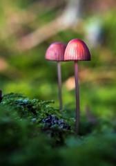 Sweden, Mushrooms