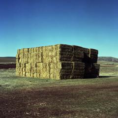 Bales of hay in rural landscape