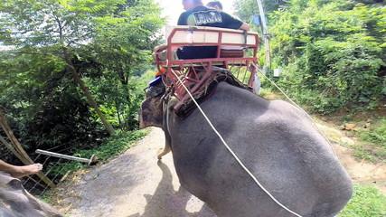 Elephant carrying tourists, Phuket, Thailand