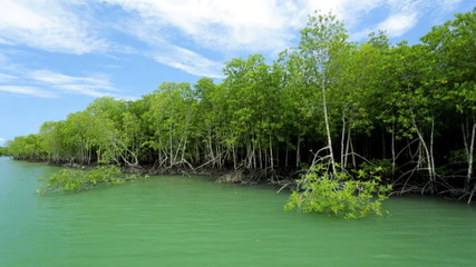 Mangrove trees timber used for boats houses, Thailand