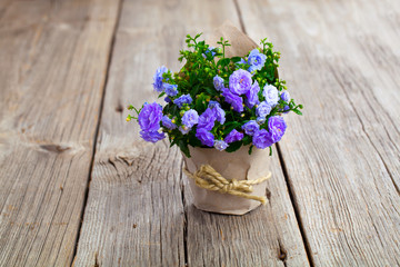 blue Campanula terry flowers in paper packaging, on wooden backg
