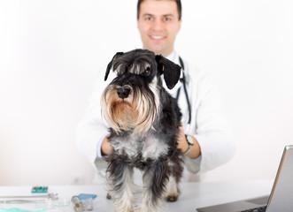 Miniature schnauzer with veterinarian