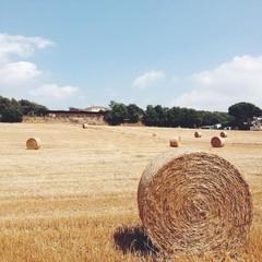 Spain, Catalonia, Barcelona Province, Maresme, Tordera,  Bale of hay
