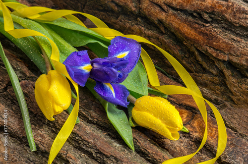 Foto op Canvas Iris Flower iris and tulips with water drops on wooden background