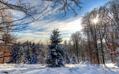 Germany, Hesse, Darmstadt, Rheingau-Taunus-Kreis, Niedernhausen, Glade of snowy forest on sunny day