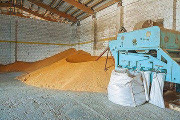 grain dryer and pile of wheat corns in old warehouse