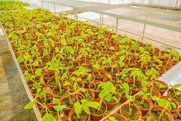 view on big set of pots with seedlings in greenhouse