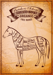 vector diagram cut carcasses horse