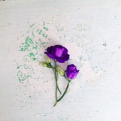 Purple Eustoma