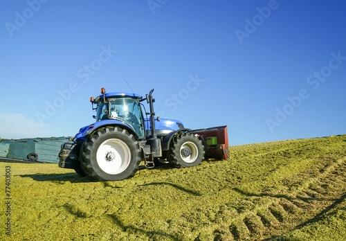 Silomaisernte,  Traktor mit Planierschild verteilt Maissilage - 77403003