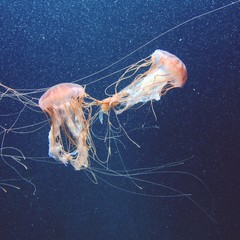 Germany, Berlin, Entangled jellyfish