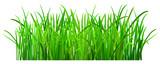 Green grass © Olga Moonlight