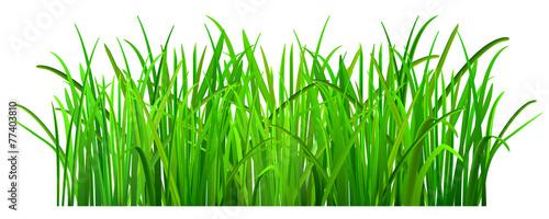 Green grass - 77403810