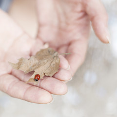 Person holding leaf with ladybug