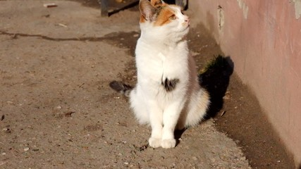 Pussy cat sitting in the street on the bright sun full HD