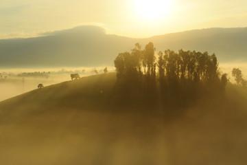 Thailand, Chiang Mai Province, Chiang Mai, Sunlight through fog