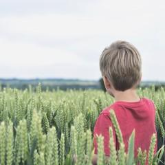 Rear view of boy in wheat field