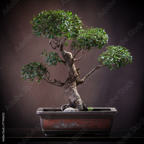 Aluminium Bonsai Agrume bonsai