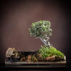Casetta e bonsai