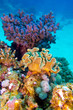 coral reef with great hard and soft corals in tropical sea