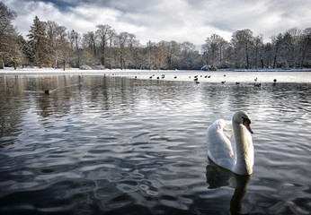 UK, England, Surrey, Birds on frozen lake
