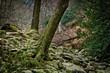 Wald in Wicklow Mountain